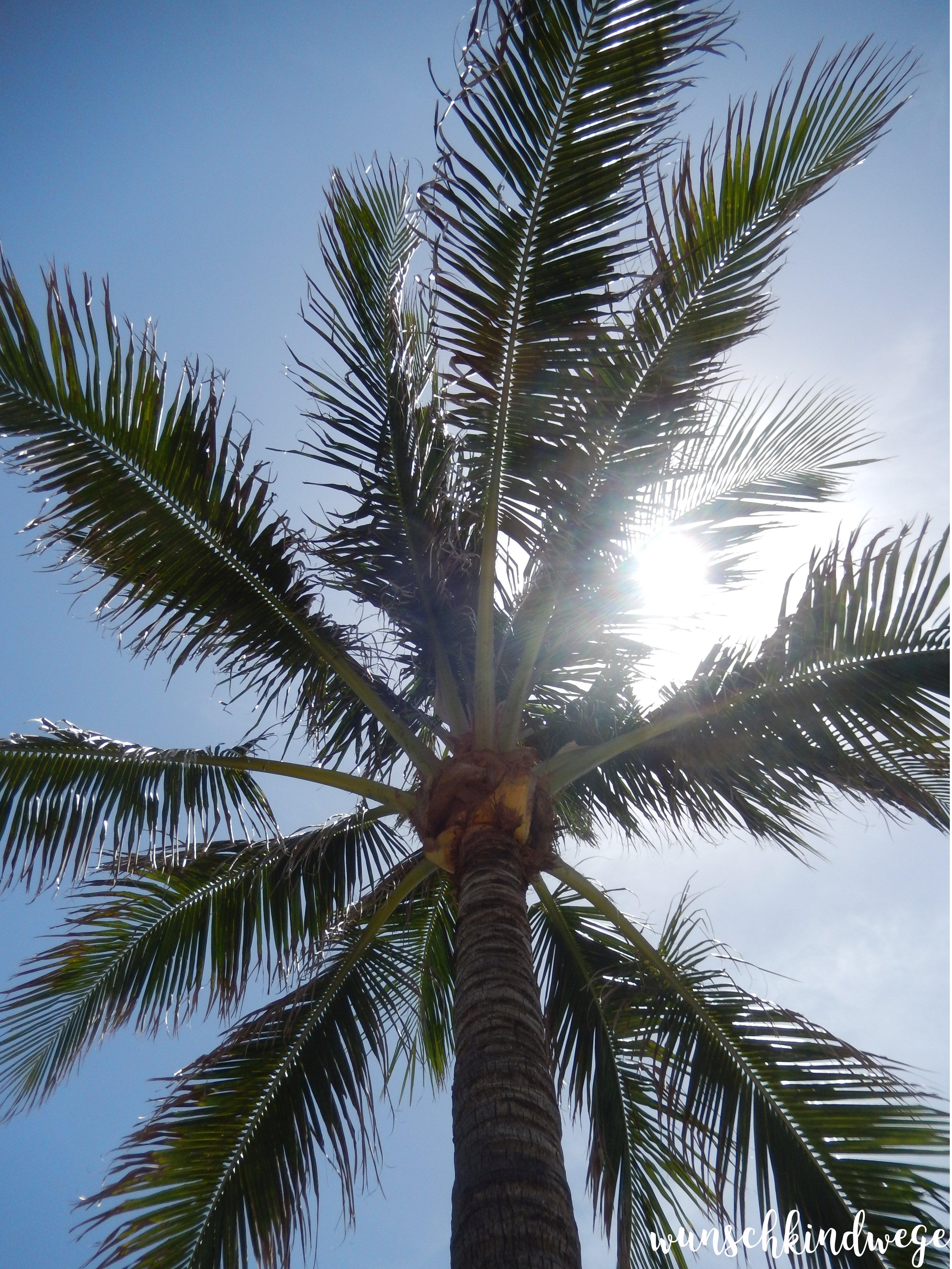 Florida Palme Sonne