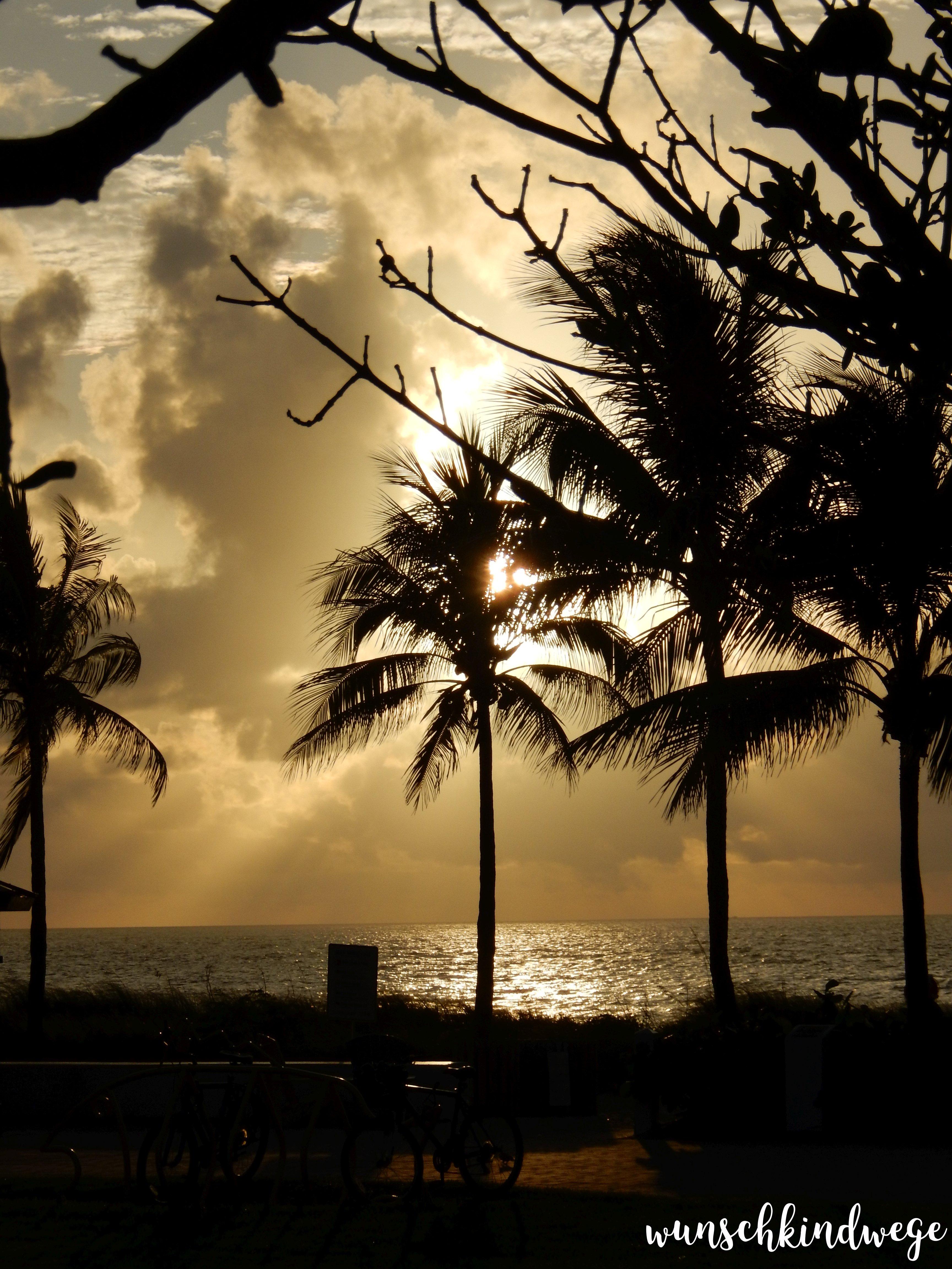 Florida Sonnenaufgang Palmen