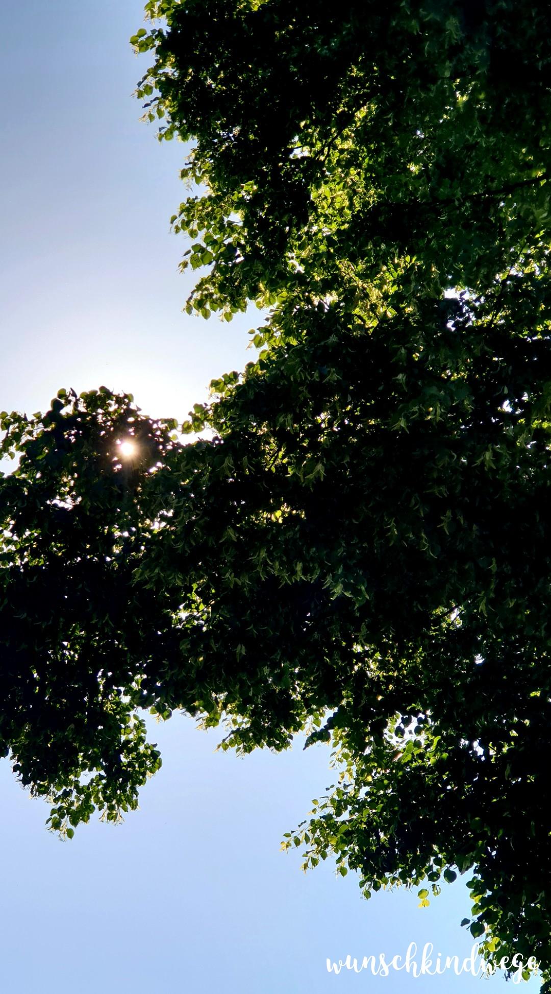 Pfingstwochenende Sonne Bäume