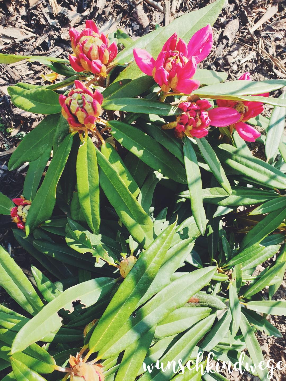 Osterwochenende 2019 - Rhododendron