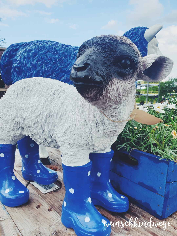 Blaues Schaf