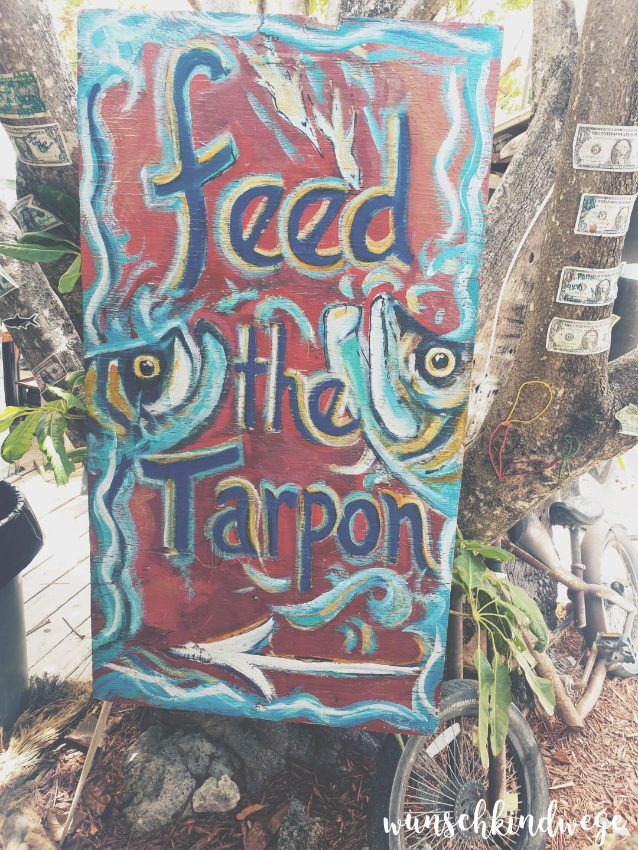 Robbies of Islamorada - Feed the Tarpon
