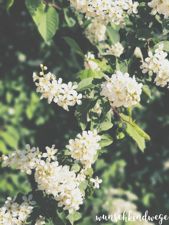 Blüten Wochenende in Bildern