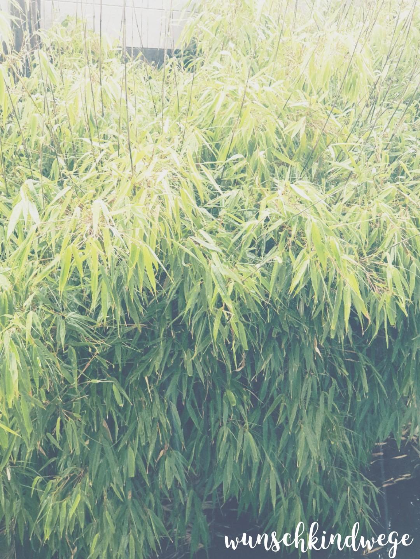 Bambus Regen